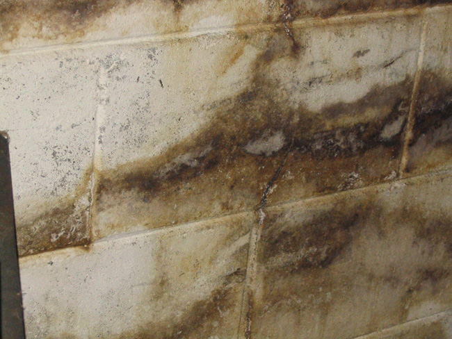 Good Basement Mold Great Ideas