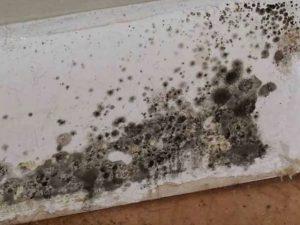 Basement Mold | Newark, OH